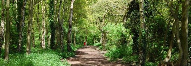 Walks for all – Stanney Woods Local Nature Reserve
