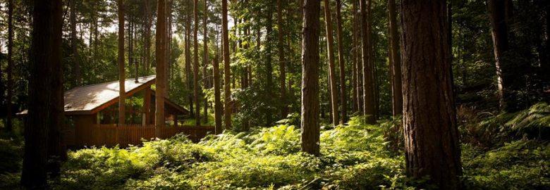 Forest Holidays Delamere Forest