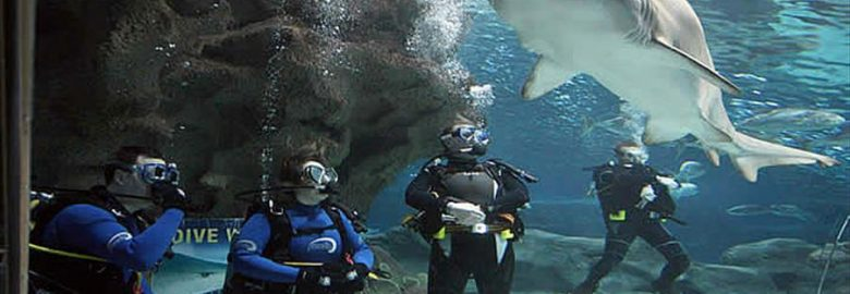 Shark Dives at Blue Planet Aquarium