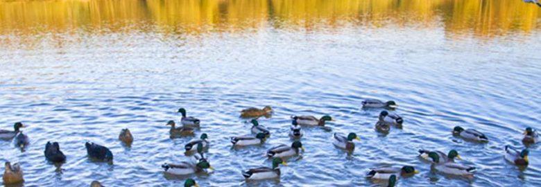 Brereton Heath Local Nature Reserve
