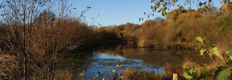 Alsager Series No. 4 – Borrowpit Meadow