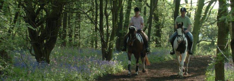 Equestrian Escapes