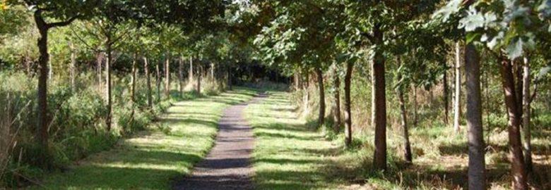 Walks for All – Tarvin Community Woodlands