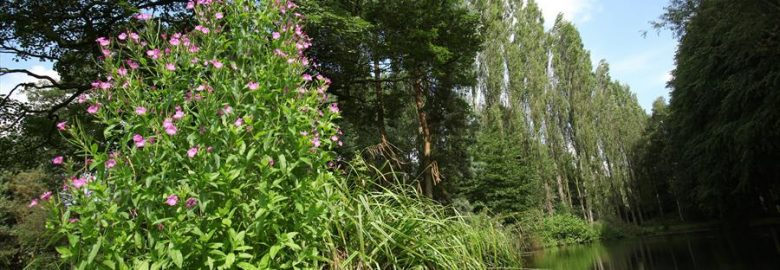 The Lovell Quinta Arboretum Circular Walk